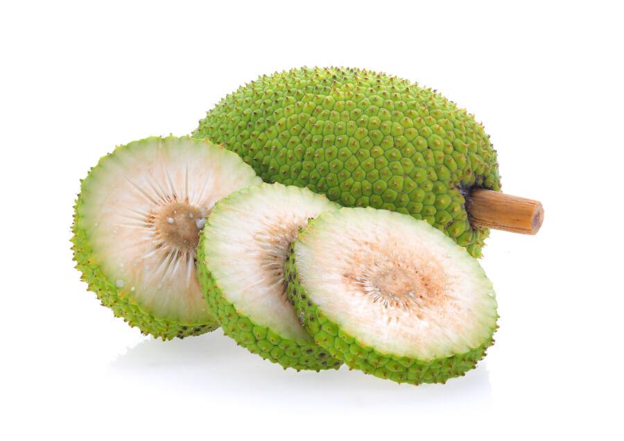 Breadfruit tree